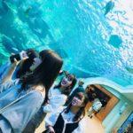 名古屋の人気観光地|修学旅行やデートなら「名古屋港水族館」